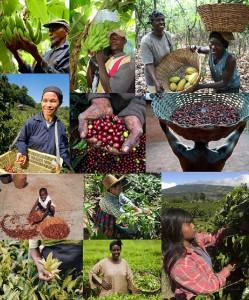 Fairtrade teelt, koffiebonen, theebladeren en bananen